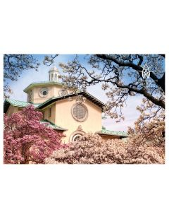 Magnolia Plaza Cherry Blossom Post Card