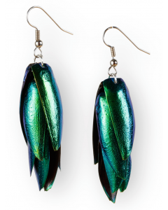 Beetle Wing Earrings